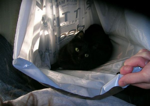 adorable_kitty_cats_in_bags_640_09.jpg