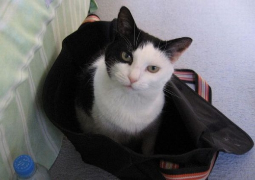 adorable_kitty_cats_in_bags_640_11.jpg