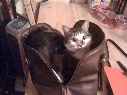 adorable_kitty_cats_in_bags_640_12.jpg