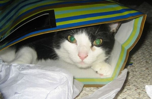 adorable_kitty_cats_in_bags_640_14.jpg