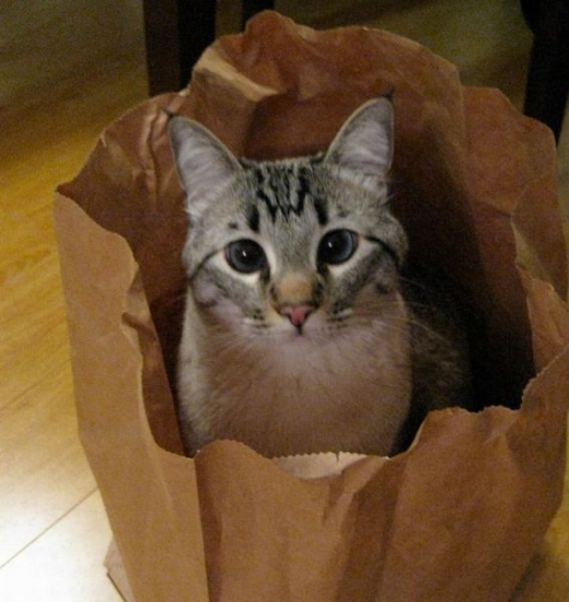 adorable_kitty_cats_in_bags_640_15.jpg