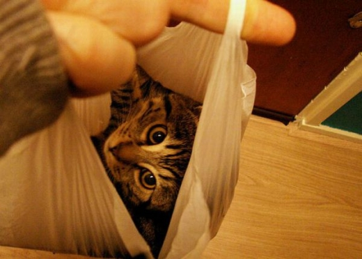 adorable_kitty_cats_in_bags_640_16.jpg