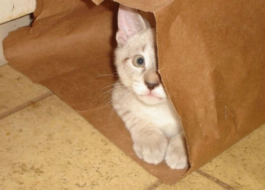 adorable_kitty_cats_in_bags_640_17.jpg