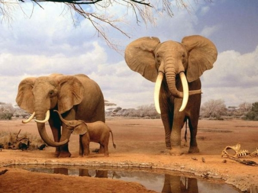 beautiful_elephant_images_640_03.jpg