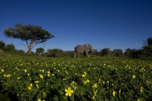 beautiful_elephant_images_640_05.jpg
