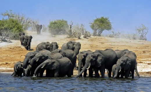 beautiful_elephant_images_640_11.jpg