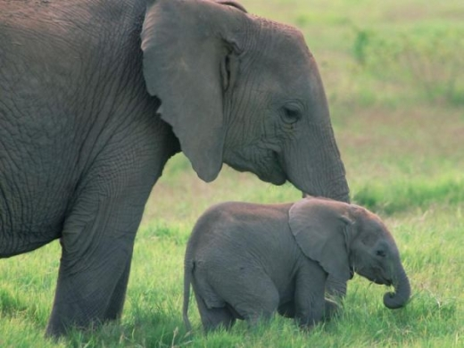 beautiful_elephant_images_640_14.jpg