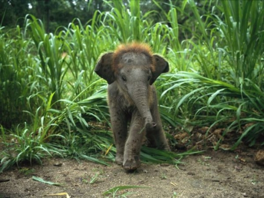 beautiful_elephant_images_640_37.jpg
