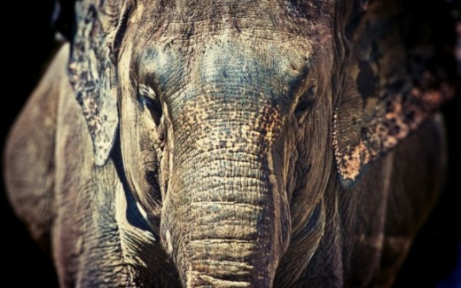 beautiful_elephant_images_640_38.jpg