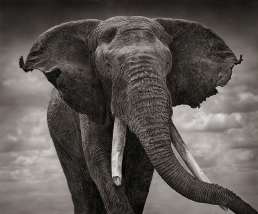 beautiful_elephant_images_640_75.jpg