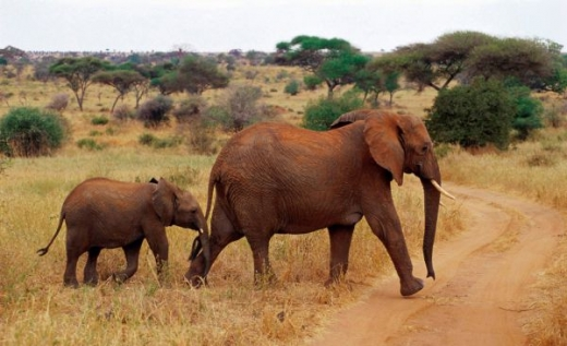 beautiful_elephant_images_640_88.jpg