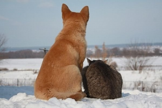 cat_and_dog_friends_01.jpg