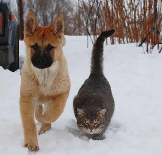 cat_and_dog_friends_02.jpg