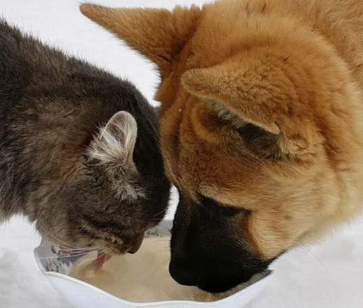 cat_and_dog_friends_04.jpg