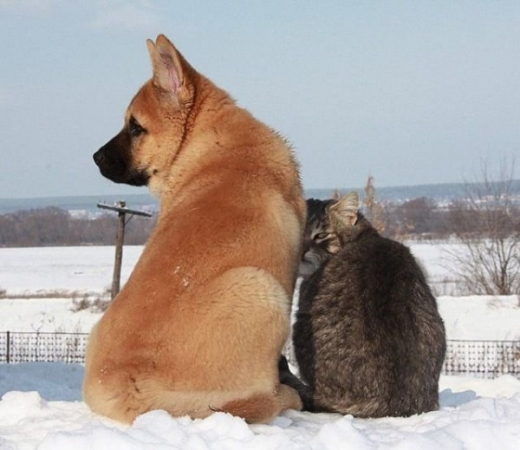 cat_and_dog_friends_07.jpg