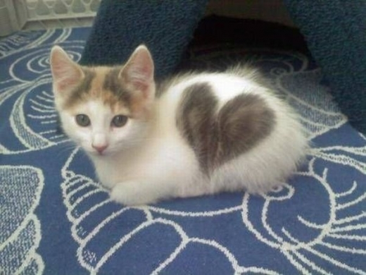 cats_with_heart_n63z3_640_10.jpg