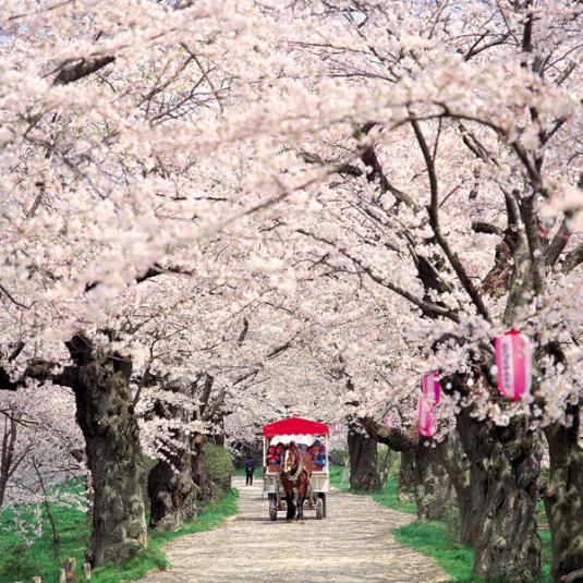 cherry_blossoms_carriage.jpg