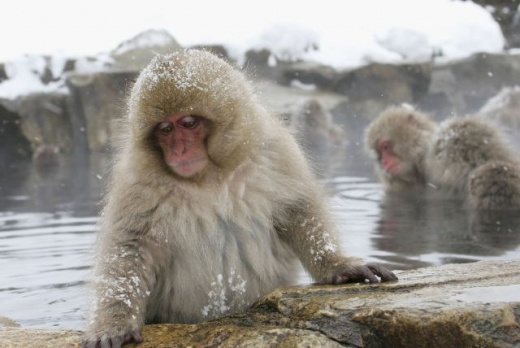 cleaning_monkeys_640_05.jpg