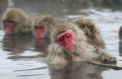 cleaning_monkeys_640_09.jpg