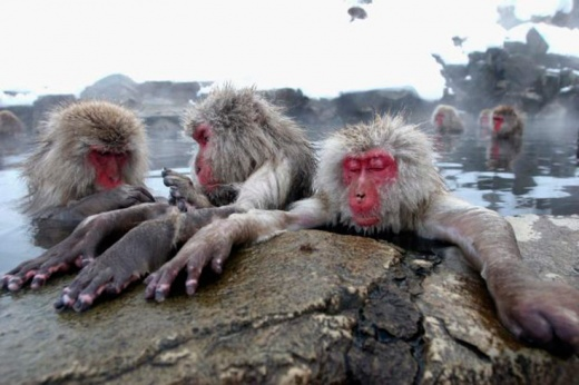 cleaning_monkeys_640_10.jpg