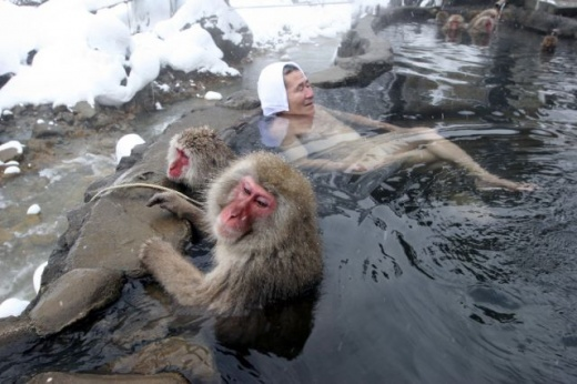 cleaning_monkeys_640_13.jpg