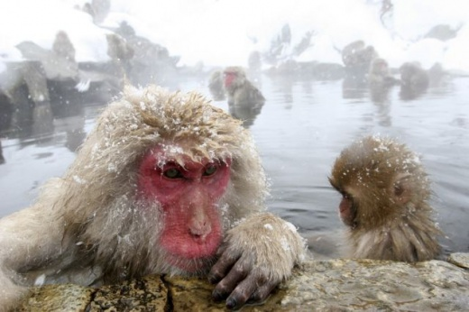 cleaning_monkeys_640_16.jpg