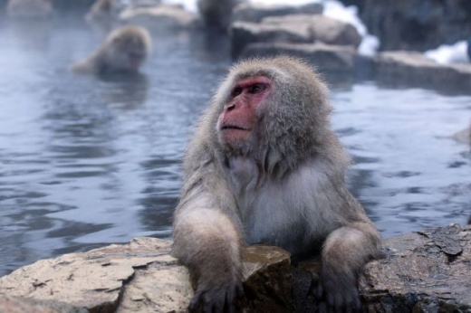 cleaning_monkeys_640_17.jpg