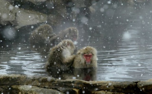 cleaning_monkeys_640_23.jpg