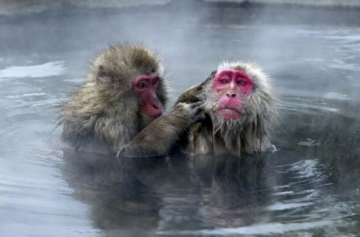 cleaning_monkeys_640_24.jpg