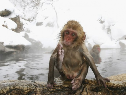 cleaning_monkeys_640_26.jpg