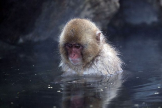 cleaning_monkeys_640_28.jpg