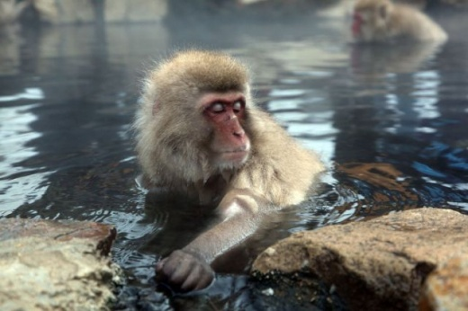 cleaning_monkeys_640_30.jpg