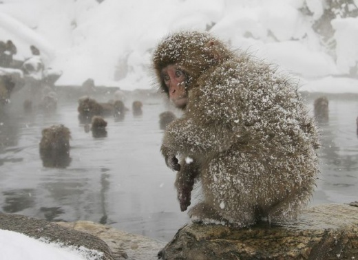 cleaning_monkeys_640_33.jpg