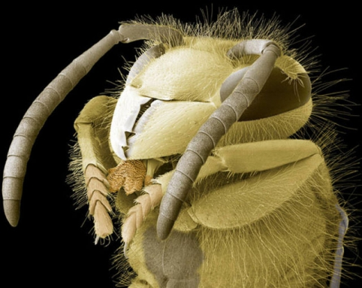 close_ups_of_insects_in_3d_640_02.jpg