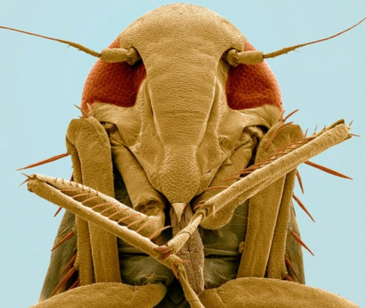 close_ups_of_insects_in_3d_640_11.jpg