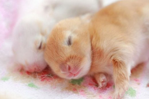 cute_baby_animals_640_16.jpg