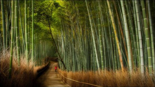 fantastic_bamboo_grove_in_japan_640_01.jpg