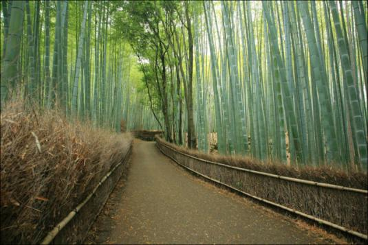 fantastic_bamboo_grove_in_japan_640_02.jpg