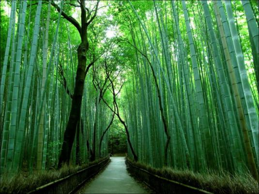 fantastic_bamboo_grove_in_japan_640_03.jpg