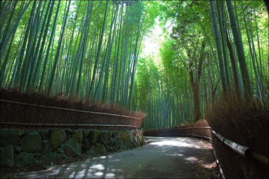 fantastic_bamboo_grove_in_japan_640_04.jpg