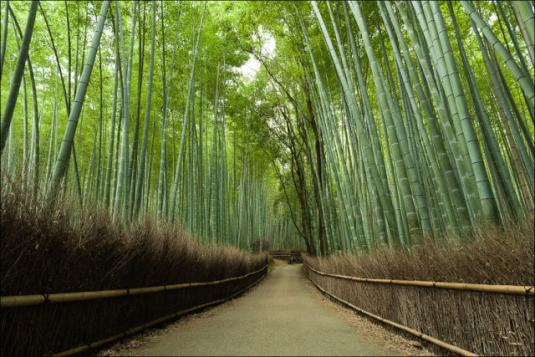 fantastic_bamboo_grove_in_japan_640_05.jpg