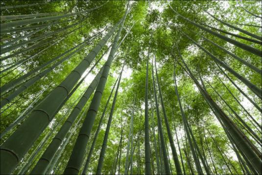 fantastic_bamboo_grove_in_japan_640_06.jpg