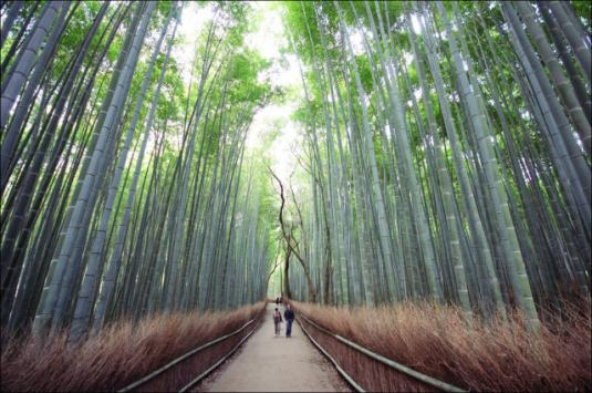 fantastic_bamboo_grove_in_japan_640_07.jpg