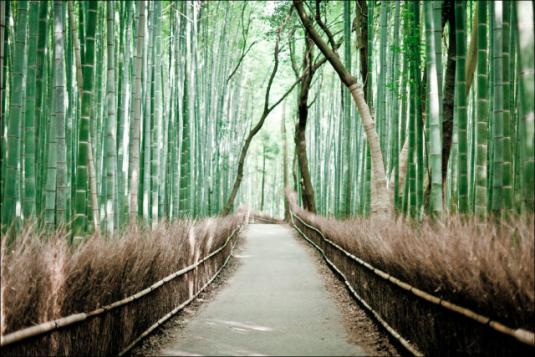 fantastic_bamboo_grove_in_japan_640_08.jpg