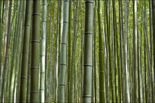 fantastic_bamboo_grove_in_japan_640_10.jpg