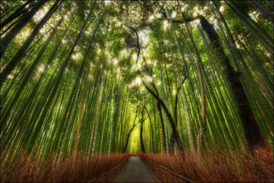 fantastic_bamboo_grove_in_japan_640_13.jpg