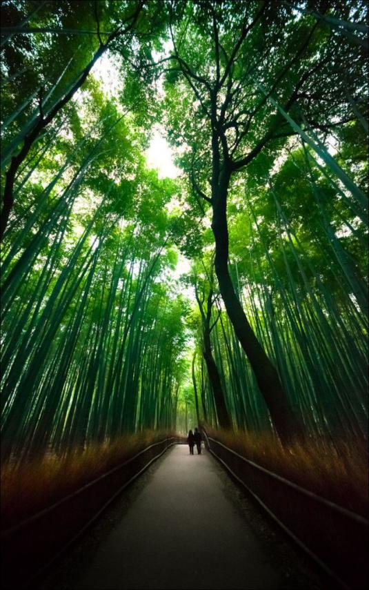 fantastic_bamboo_grove_in_japan_640_high_11.jpg