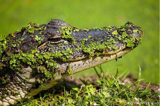 fascinating_camouflaged_animals_640_21.jpg