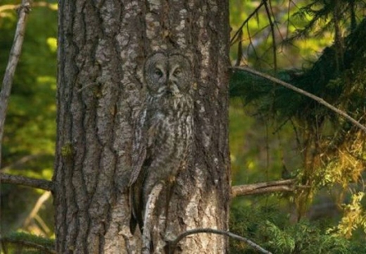 fascinating_camouflaged_animals_640_28.jpg