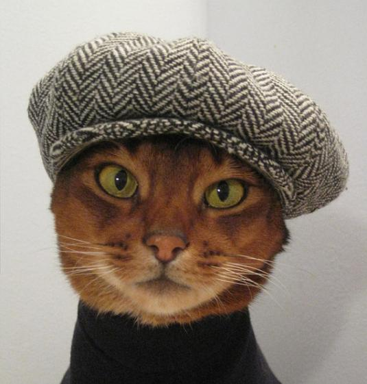 hats-for-cats-01.jpg